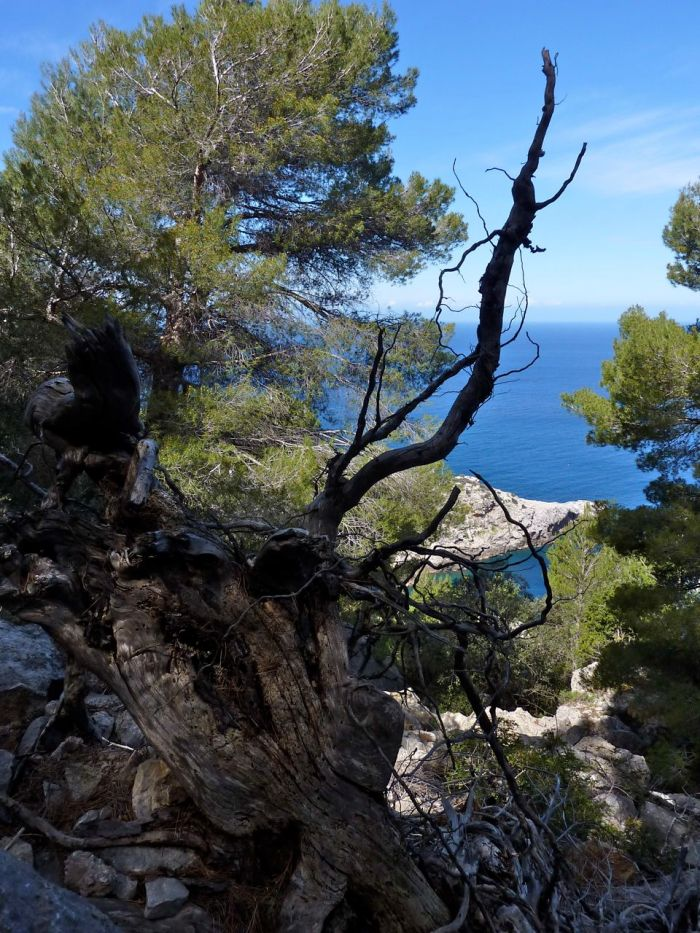 View down to the Sea from the Soller Caost Path